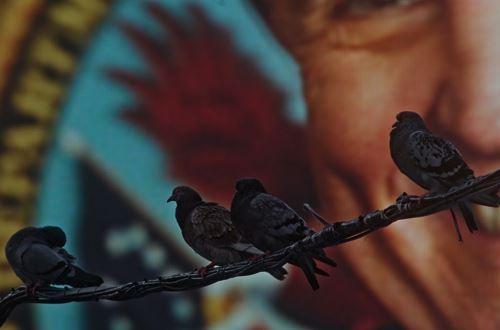 程然作品《狂人日记·纽约:信鸽》,有声单频录像。-资料图片