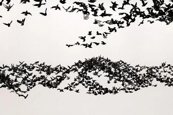 《鸟云》装置,2019,维多利亚州国立美术馆