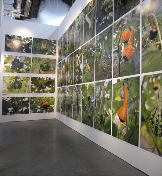 《南瓜计划--李山、张平杰生物艺术作品展》现场,香格纳画廊H-空间,2007年。图片来源:香格纳画廊