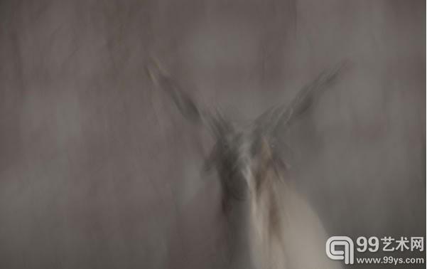 欧拉羊高清图片