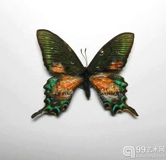 在蝴蝶的翅膀上作画-人人都是艺术家 什么都是艺术品